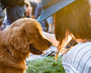 獣医転職、どうやって求人を見つける?2